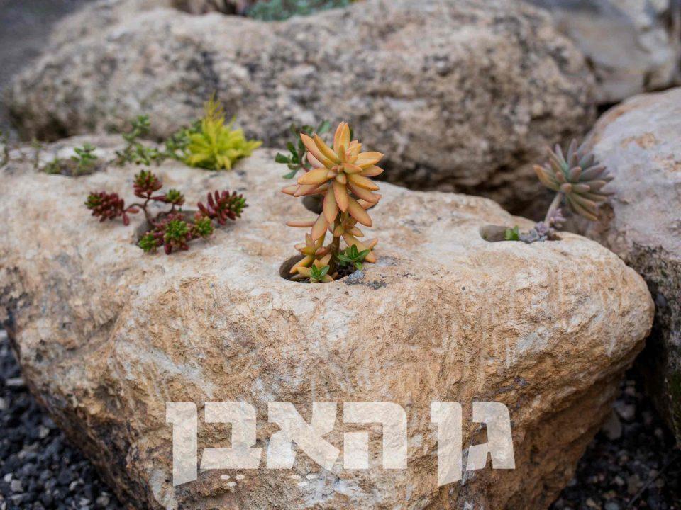 שוקת עם חורי שתילה בסלע מקומי